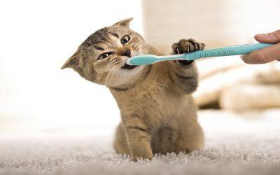 Tandenpoetsen bij Katten